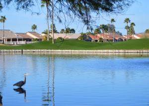 2014 Market Report in Sun Lakes AZ
