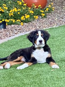 Landscaping ideas for patios include using pet friendly plants.
