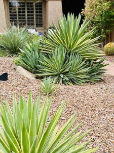 Landscaping ideas for patios suggest using cacti.